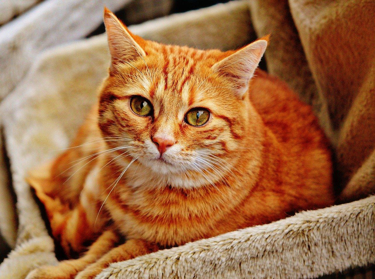 Penser à avoir un chat dans vos maisons.