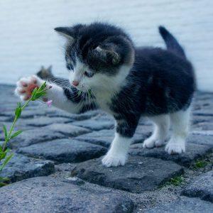 Quels objets faut-il prendre quand on adopte un chat ?