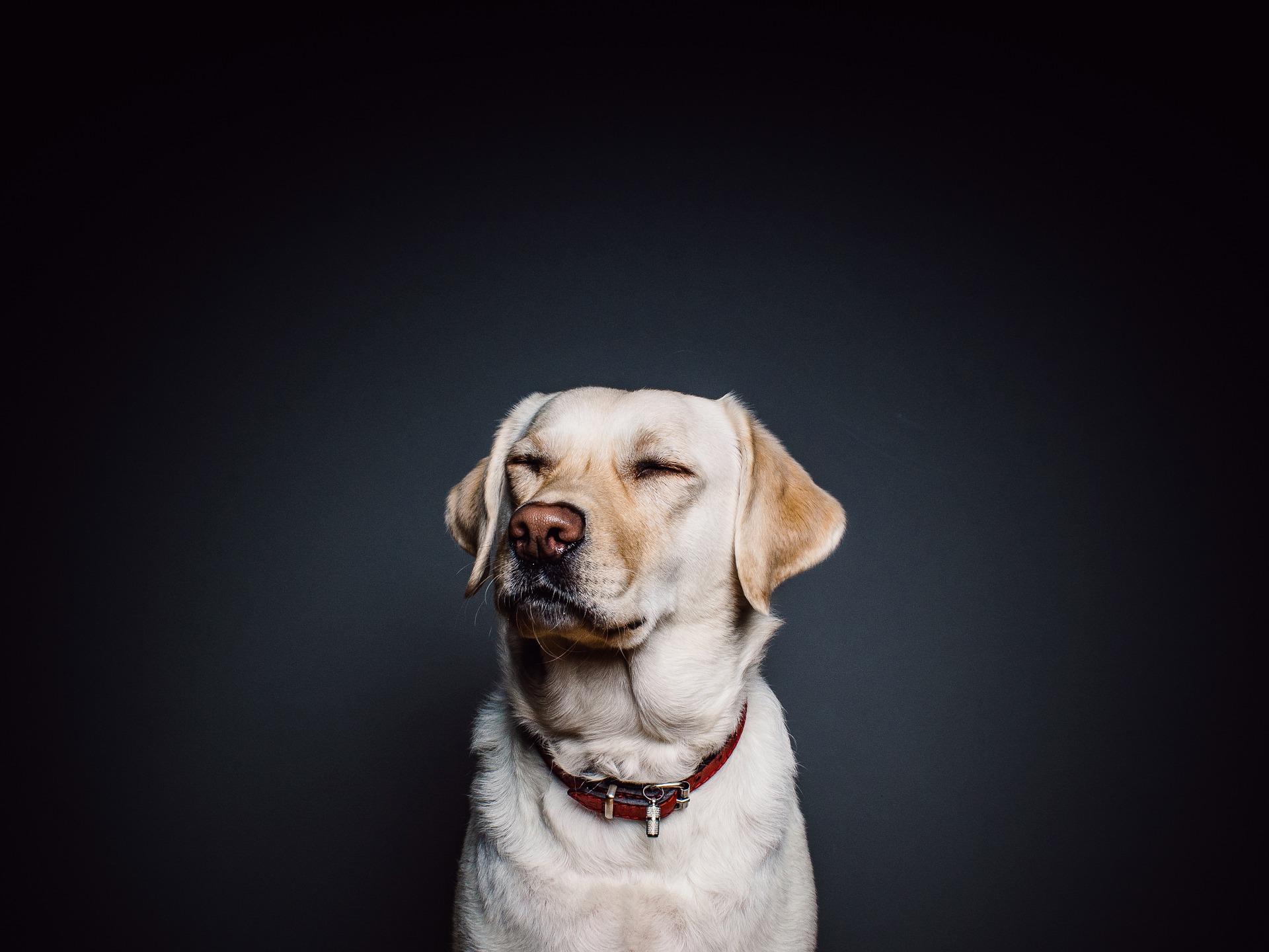 Comment sortir avec un chien sans laisse ?