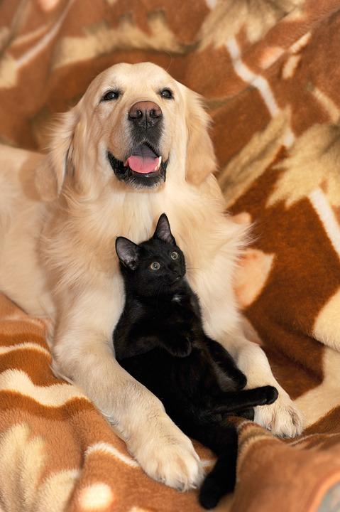 Chien et chat: comment établir la cohabitation?