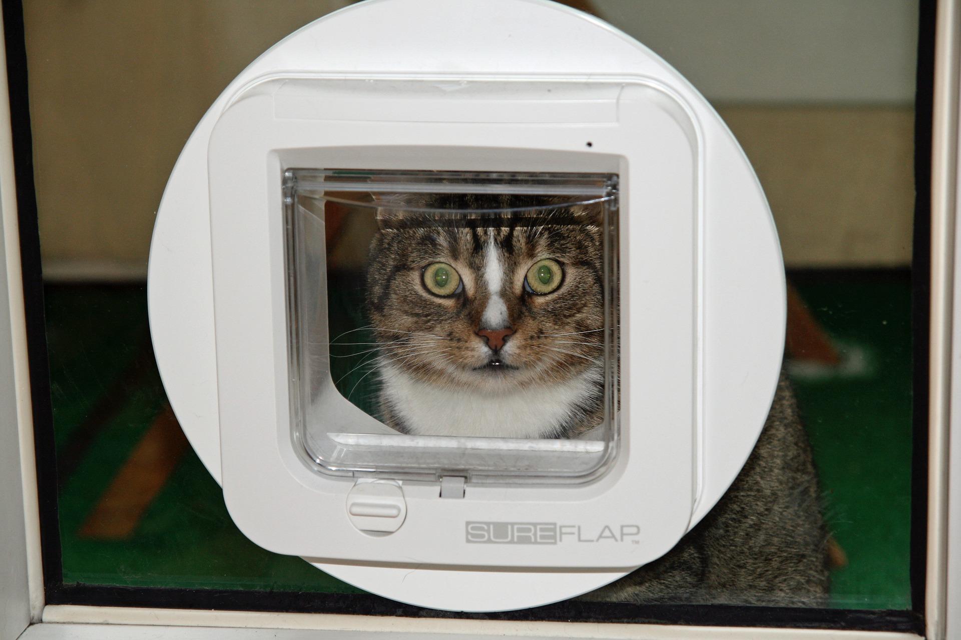 Comment gérer l'entrée et la sortie de vos animaux domestiques ?
