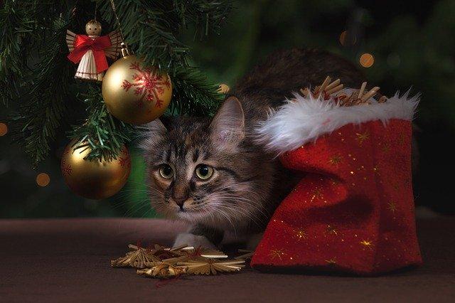 Cadeau de Noël à offrir à son chat
