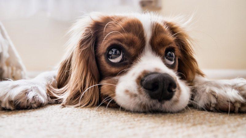 Prendre un chien, à quoi penser