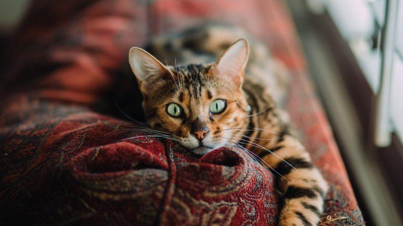 La litière pour chat, un accessoire très utile