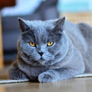 Choisir le meilleur bac à litière pour son chat