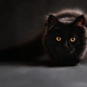 Le chat et la diarrhée : ce qu'il faut savoir