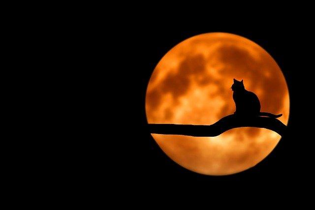 Les chats ont-ils vraiment des capacités spirituelles ?