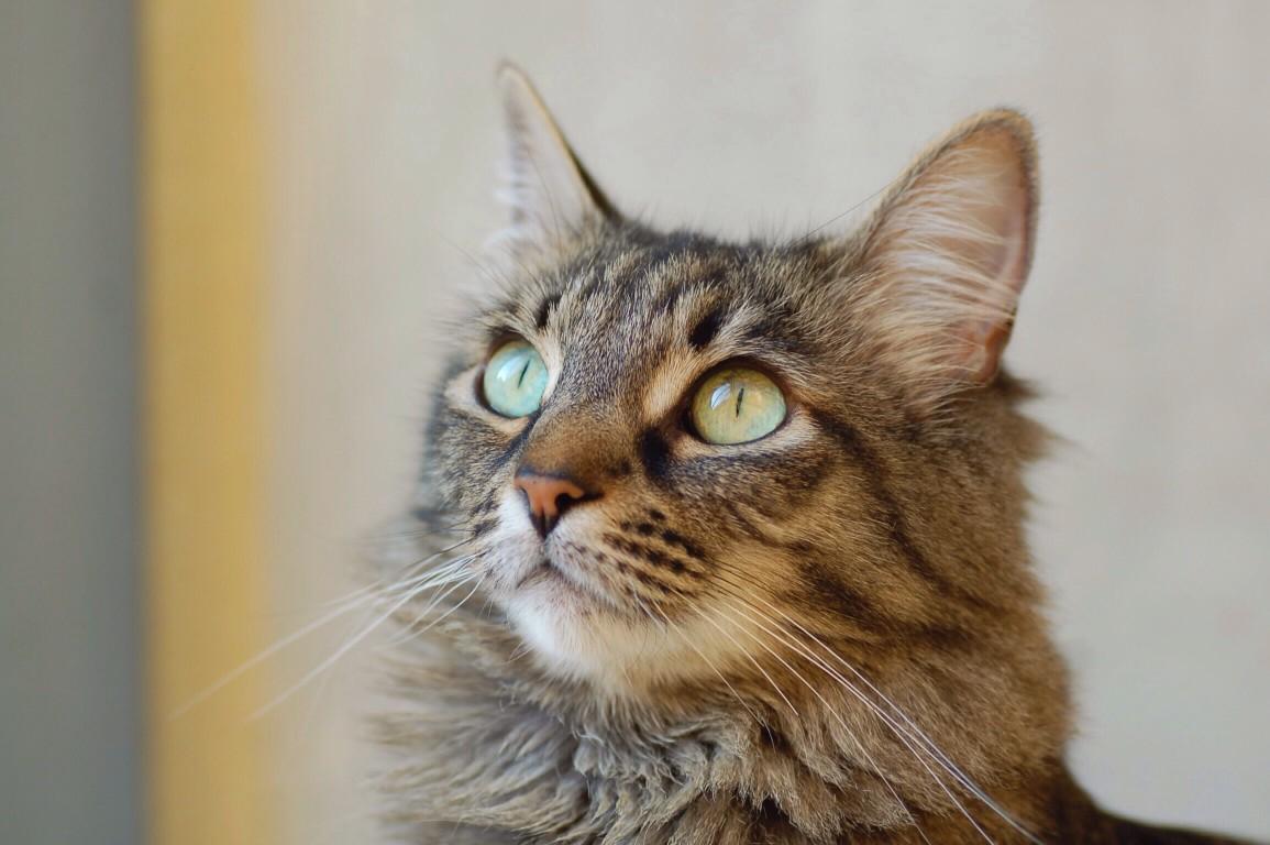 Que faire lorsqu'un chat est agité ?