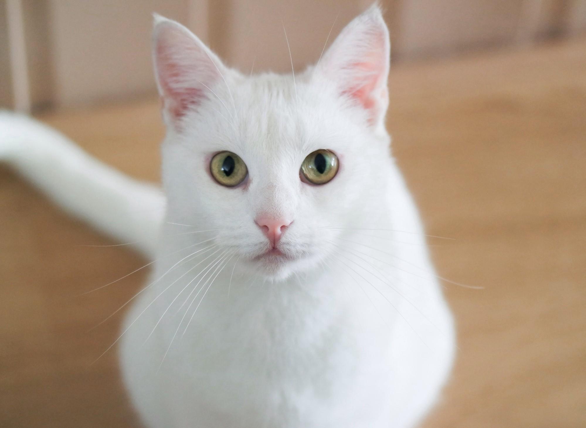 Adopter un chat, comment bien répondre à ses besoins ?