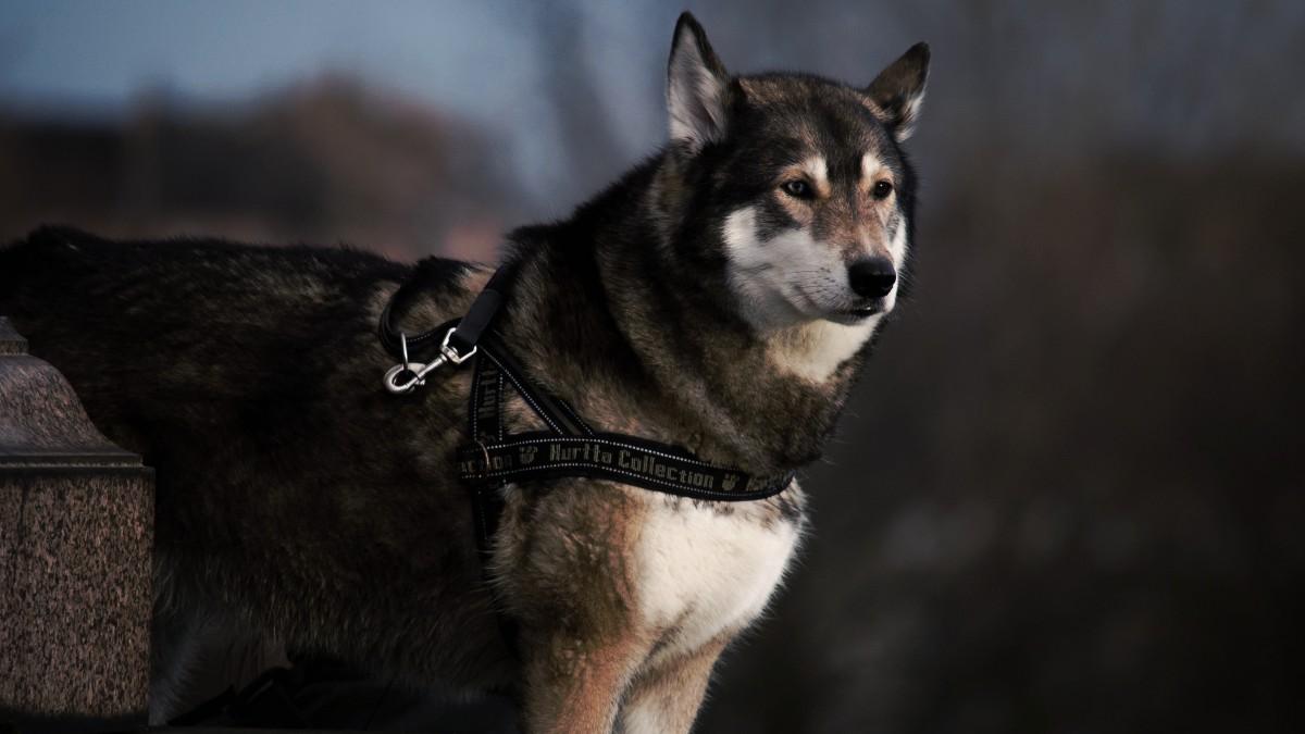 Les accessoires indispensables pour emmener son chien en randonnée